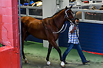#4 Jackie's Warrior enters the paddock for the Southwest Stakes (Grade III) horse race at Oaklawn Racing Casino Resort in Hot Springs, Arkansas. Ted McClenning/Eclipse Sportswire/CSM