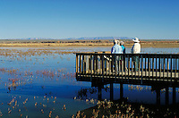 Birdwatchers enjoys the view from an observation deck in the Bosque del Apache National Wildlife Refuge. landscape, waterway. New Mexico, Bosque del Apache National Wildlife Refuge.