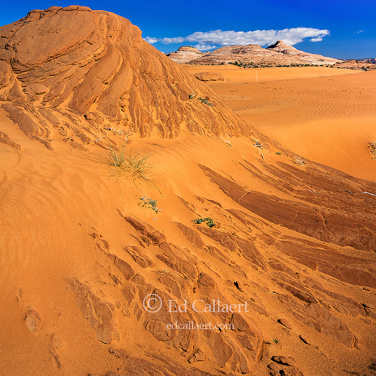 Sand Dunes, Grand Staircase-Escalante National Monument, Utah
