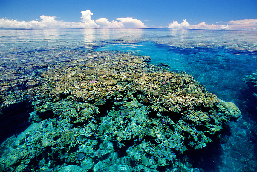Coral reefs are fragile environments that require warm, clean and clear water to grow. Fiji, Indo-Pacific