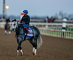November 4, 2020: Knicks Go, trained by trainer Brad Cox, exercises in preparation for the Breeders' Cup Dirt Mile at Keeneland Racetrack in Lexington, Kentucky on November 4, 2020. Scott Serio/Eclipse Sportswire/Breeders Cup