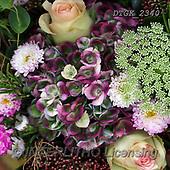 Gisela, FLOWERS, BLUMEN, FLORES, photos+++++,DTGK2340,#F#, EVERYDAY
