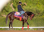 OCT 28: Breeders' Cup Sprint entrant Hog Creek Hustle, trained by Vickie L. Foley, at Santa Anita Park in Arcadia, California on Oct 28, 2019. Evers/Eclipse Sportswire/Breeders' Cup