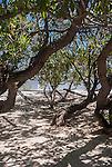 A hammock in the shade of a tree on the remote island of Kiritimati, Kiribati