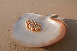 Jewelmer Pearlfarm, a Pinctada maxima shell with loose golden pearls. A perfect one can catch up to 10.000 US$