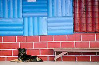 Mixed breed dog waits cheerfully at station in San Jose, CR