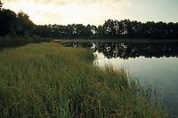 Stichter See, Binnensee in der Lüneburger Heide, Südheide südlich von Neuenkirchen im Landkreis Heidekreis, Niedersachsen, Deutschland, Naturschutzgebiet