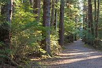Pathway along the Sitka National Historic Park, Southeast, Alaska.