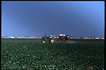 2-28-01.Pesticides are being sprayed onto crops in the shadow of suburban sprawl in the once farm area of west Miami-Dade.