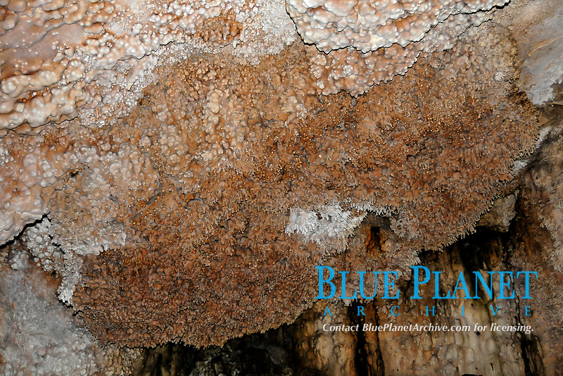 Geological detail of a wall at Anhumas Abyss, Bonito, Mato Grosso do Sul, Brazil