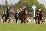 April 24th, 2011 Orfevre wins the 71st Satsuki Sho at Tokyo Racecourse. Tokyo, Japan