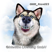Howard, REALISTIC ANIMALS, REALISTISCHE TIERE, ANIMALES REALISTICOS, paintings+++++Siberian Husky,GBHRPROV223,#a#, EVERYDAY ,selfies
