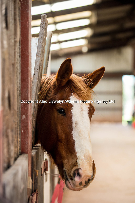 FAO Laura Lean.<br /> Friday 20 January 2017<br /> Pictured: A horse looks on in the stables <br /> Re: Sue Scourfield's riding school is  being hit by increasing business rates.