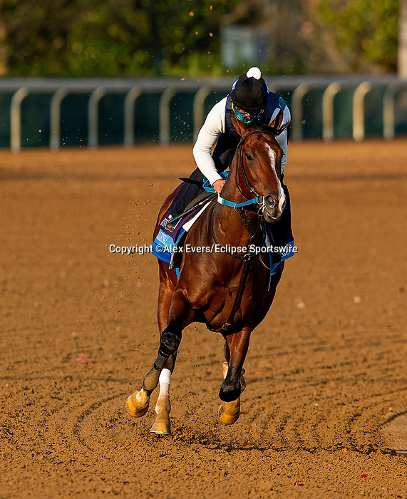 November 1, 2020: Jackie'S Warrior, trained by trainer Steven M. Asmussen, exercises in preparation for the Breeders' Cup Juvenile at Keeneland Racetrack in Lexington, Kentucky on November 1, 2020. Alex Evers/Eclipse Sportswire/Breeders Cup /CSM