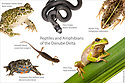 Montage of reptiles and amphibians of the Danube Delta. Photographed in mobile field studio on a white background. Danube Delta, Romania. May.