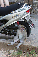 Bali, Indonesia.  Monkey and Motorcycle at Entrance to Kecak Dance Arena adjacent to Uluwatu Temple.