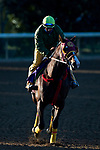 November 3, 2020: Big Runnuer, trained by trainer Victor Garcia, exercises in preparation for the Breeders' Cup Turf Sprint at Keeneland Racetrack in Lexington, Kentucky on November 3, 2020. Jon Durr/Eclipse Sportswire/Breeders Cup