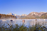 Steam rises from Jackson Lake with the Grand Tetons as backdrip in early morining, at Leeks Marina, Grand Teton National Park, United States, Wyoming.