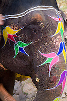Colorful painted elephant ready to give rides, Amber Fort, Rajasthan, Jaipur, India