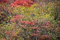 Autumn brush foliage