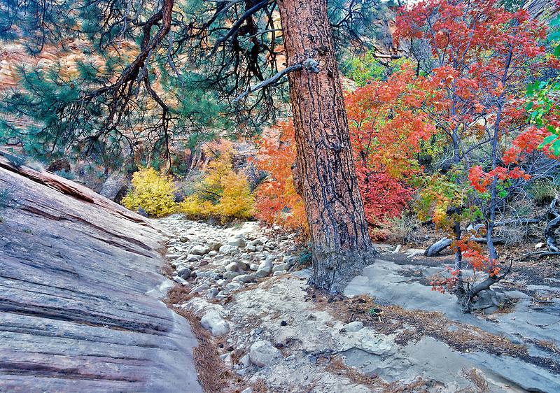 Fall colors in Zion National Park, Utah.