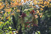 Herbstkranz, Herbst-Kranz, Reifekranz, herbstlich, Kranz, Erntedank, Erntedank-Kranz, Kranz aus Früchten, Samenständen, Ranken und dergleichen, basteln mit Naturmaterialien, Bastelei. Holunder, HAgebutten, Hopfen, Wilde Möhre, Weißdorn