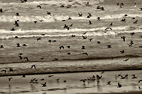Seagulls on beach . Samuel H. Boardman State Park, Oregon
