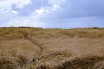"""At Long Beach, WA the """"World's Longest Beach"""" is lined by deep dunes and tall grass.  The Discovery Trail winds for miles providing paved and boardwalk access.  Here a side trail heads to the beach. Olympic Peninsula"""