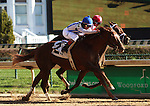 November 14, 2015 Synchrony (Shaun Bridgmohan) wins the 2nd race at Churchill Downs, a 7 1/2 furlong AOC for two year olds. Owner Pin Oak Stable LLC (Josephine Abercrombie), trainer Donnie Von Hemel. By Tapit x Brownie Points (Forest Wildcat.) Second was Uncle Walter (Javier Castellano) ©Mary M. Meek/ESW/CSM