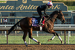ARCADIA, CA  OCTOBER 30: Breeders' Cup Juvenile Fillies entrant Perfect Alibi, trained by Mark E. Casse,   exercises in preparation for the Breeders' Cup World Championships at Santa Anita Park in Arcadia, California on October 30, 2019.  (Photo by Casey Phillips/Eclipse Sportswire/CSM)