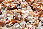 The fruit of the cocount known as the mesocarp lies drying in the sun on the remote island of Kiritimati, Kiribati