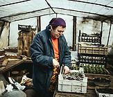 Tatjana Sotnikawa baut seit über 40 Jahren Gemüse an.  Im Winter zieht sie die Samen in einem Gewächshaus. Früher belieferten die Bauern des Dorfes, die Industriebetriebe und städtischen Haushalte in Luhansk mit Gemüse. Jetzt ist die Grenze geschlossen und dieser Markt ist weggebrochen. Seit dem Krieg wurde das Gemüse auch für die Menschen im Dorf überlebenswichtig.