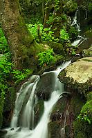Spring cascade, Tremont