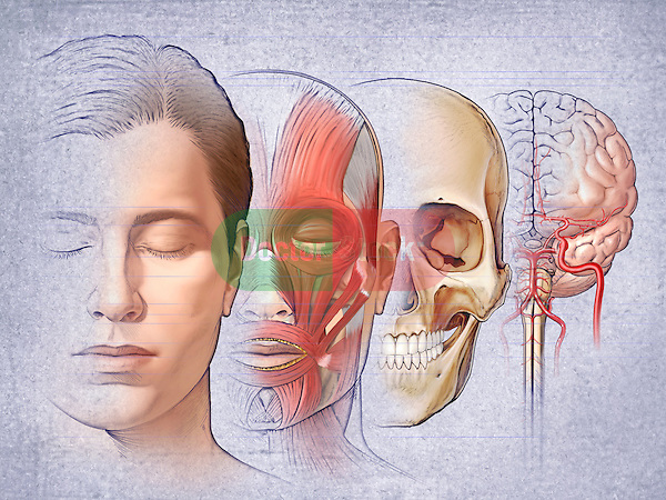 This medical illustration shows the layers of head anatomy in an adult caucasian male.