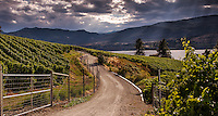 Fine Art Landscape Photograph, of sunbeams bursting through the clouds onto the vineyards and mountains located on Okanagan Lake in southern British Columba Canada.