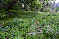 Stepping stone path across rain garden  in Taylor garden
