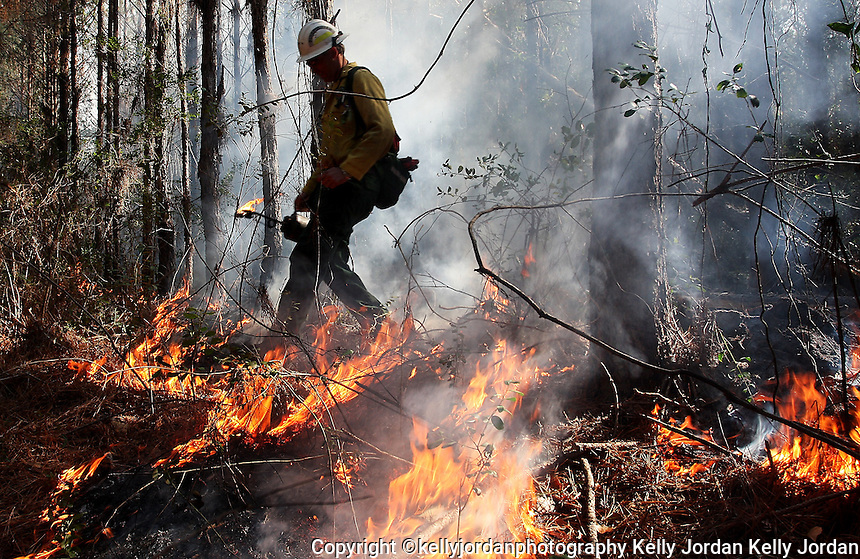 KELLY JORDAN/The Times-Union--020509--Florida Division of Forestry area supervisor Mike Work, walks along igniting brush along grid lines in the Four Creeks State Forest area just east of Callahan in Nassau County Thursday afternoon February 5, 2009. Work and his crew were executing a 320 acre prescribed burn to clear dense underbrush along the forest floor..(The Florida Times-Union, Kelly Jordan)