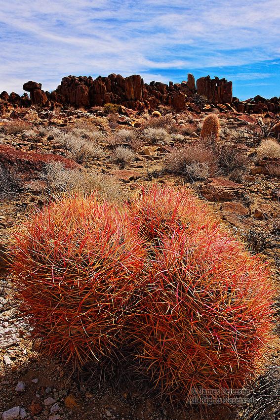 Red Barrel Cacti, Mojave Desert, California