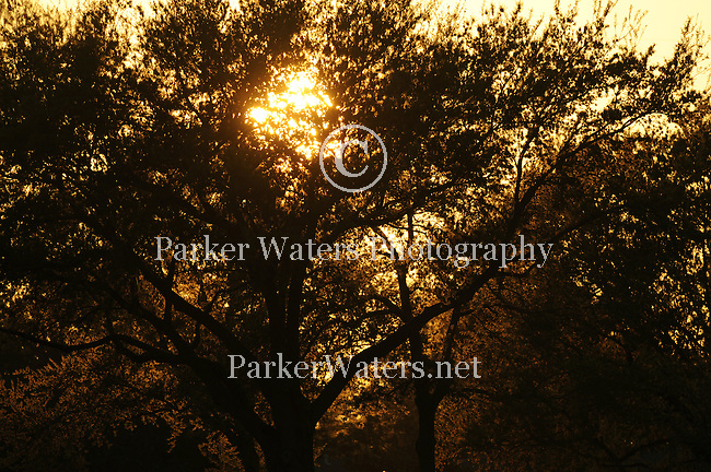 Images from Lafreniere Park in Metairie, LA.