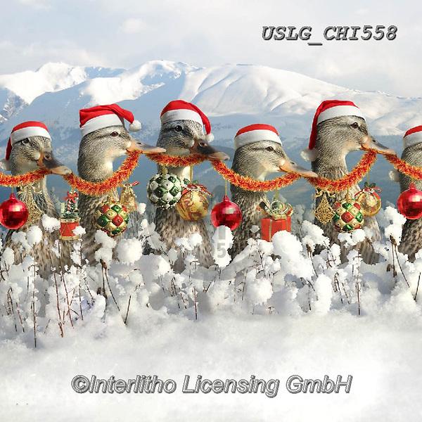 CHIARA,CHRISTMAS ANIMALS, WEIHNACHTEN TIERE, NAVIDAD ANIMALES, paintings+++++,USLGCHI558,#XA# ,funny ,funny