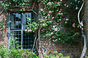 Climbing rose 'Meg', South End of Vann House, Surrey, mid June. Built by John Childe, the then owner and mayor of Guildford, in the late 17th century.