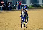 LOUISVILLE, KY - MAY 02: Mohaymen, trained by Kiaran McLaughlin and owned by Shadwell Stable, exercises and prepares during morning workouts for the Kentucky Derby and Kentucky Oaks at Churchill Downs on May 2, 2016 in Louisville, Kentucky. (photo by John Voorhees/Eclipse Sportswire/Getty Images)