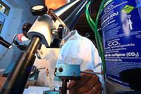 Preparing a queen for artificial insemination, anesthetized with carbon dioxide.///Préparation à l'insémination artificielle d'une reine qui est endormie à l'aide de gaz carbonique.