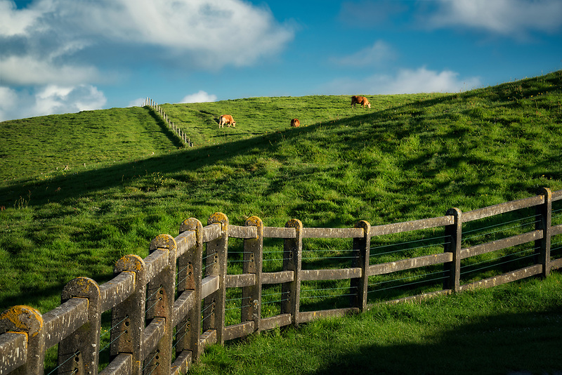FENCELINE Cliffs of Moher, Ireland, county Clare, with cows grazing
