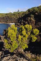 Küste bei Varadouro auf der Insel Faial, Azoren, Portugal