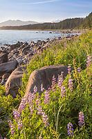 Coastal landscape along the Gulf of Alaska and the fairweather mountain range.