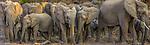 Botswana's Mashatu Reserve has a large population of elephants.