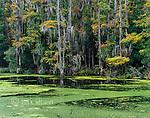 Washoe River, Nature Conservancy Santee Coastal Reserve, McLellanville, South Carolina