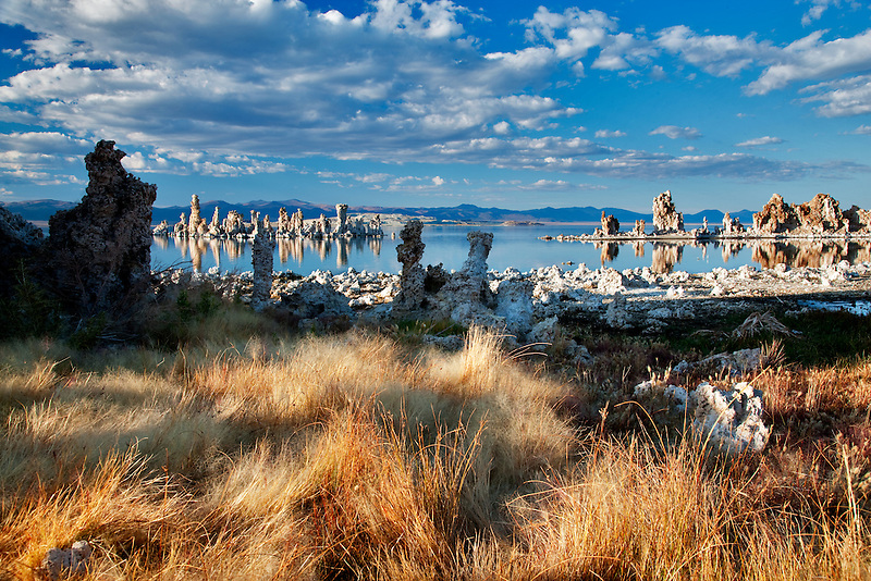 Grasses and tufa at Mono Lake, California