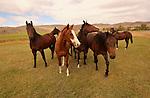 HORSES IN THE SUMMER IN BEAVERHEAD MONTANA